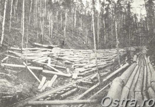 Pădure în exploatare pe Ursoaia în 1896, cu jilip şi cu şine de lemn pentru vagoane