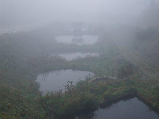 Dimineața la Poiana Izvoarelor